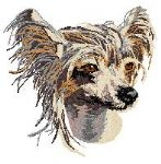 Chinese Crested Dog 2